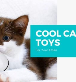 Cool Cat Toys