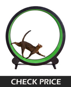 cat exercise wheel cool cat toys
